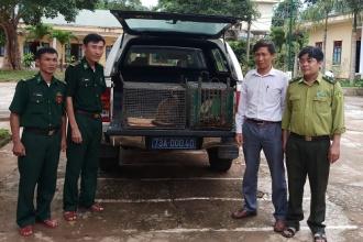 Chuyển giao động vật hoang dã quý hiếm để cứu hộ và thả về môi trường tự nhiên
